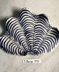 Shell – Large 095