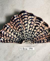 Shell – Large 096