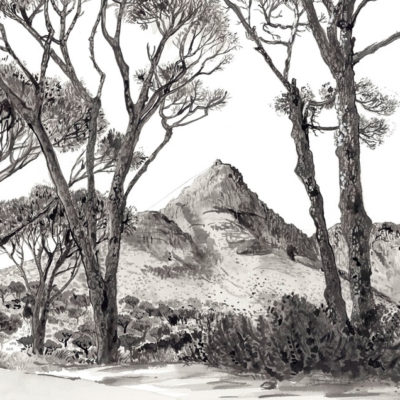 Kloof Road To Camps Bay
