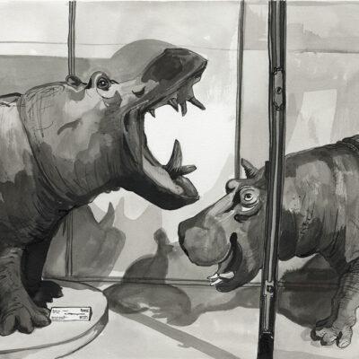 Museum Hippos